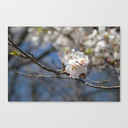Ivory No. 02 Canvas Print