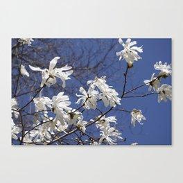 Star filled sky (Star Magnolia flowers!)      Edit Canvas Print