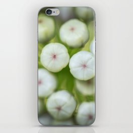 Wht-flowered Milkweed iPhone Skin