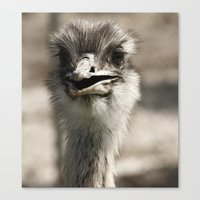 ostrich Canvas Prints featuring Ostrich by Raymond Earley