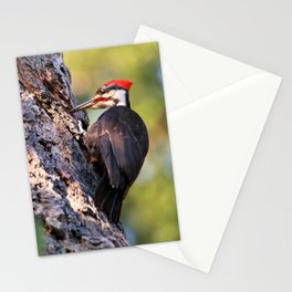 Pileated Woodpecker at Work Stationery Cards