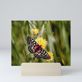A Red Dotted Checkerspot Mini Art Print