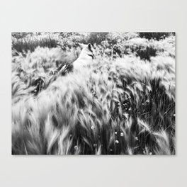 Finding Evolutionary Flow Canvas Print