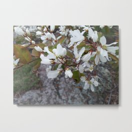 Juneberry Metal Print