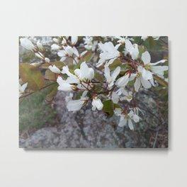 Juneberry Metal Print