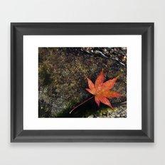 Japanese Maple Leaf 1 Framed Art Print