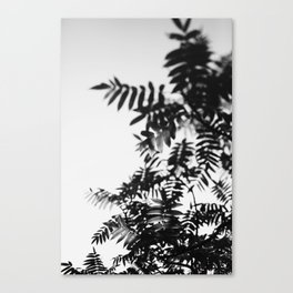 Leaf Study #8 Canvas Print
