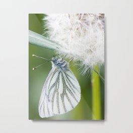 Butterfly dandelion Metal Print