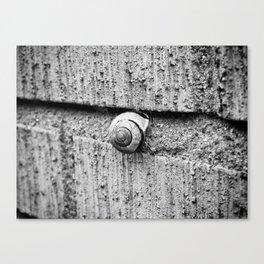 The snail Canvas Print