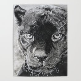 THE  PANTHER Poster