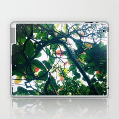 skylight Laptop & iPad Skin