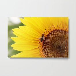 Vibrant Sunflower Metal Print