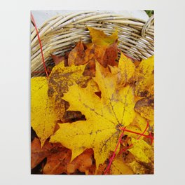 Yellow leaf in a basket Poster
