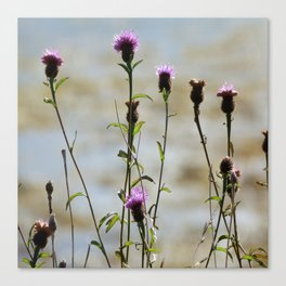 Highland Thistle Canvas Print