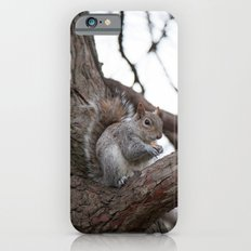 Squirrel with peanut iPhone 6s Slim Case