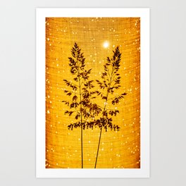 Delicate grasses - light and shadow #1 Art Print