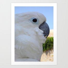 Side Portrait Of A Blue-Eyed Cockatoo Art Print