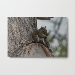 Squirrel Tail Metal Print