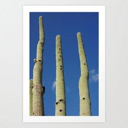 Tucson // Desert Life 3 Art Print