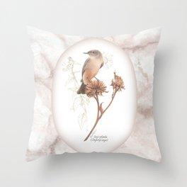 Say's phoebe (Sayornis saya) Throw Pillow