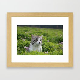 Cat to know the coming of spring. Framed Art Print