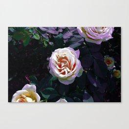 Gradient Rose Canvas Print