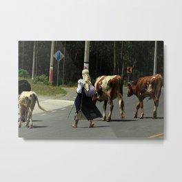 Herd of Cows Crossing a Road Metal Print