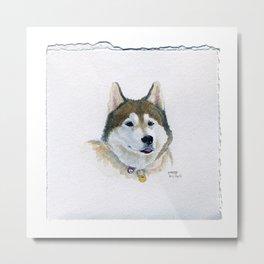Drawing #81 - A Siberian Husky Metal Print
