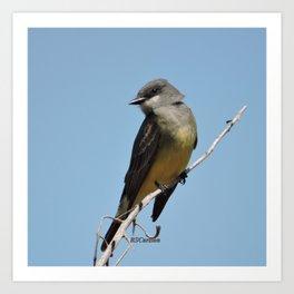 A Cassin's Kingbird Scopes the Skies for Flies Art Print