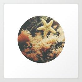 Anemone Art Print