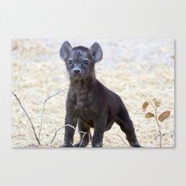 African Hyena Pup Canvas Print