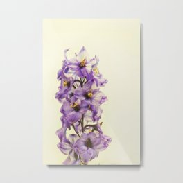 Purple Larkspur Delphinium Flowers Metal Print