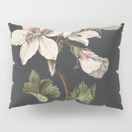 M. de Gijselaar - Pelargonium album bicolor (1830) Pillow Sham