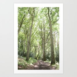 Whimsical Forest in Ireland Art Print