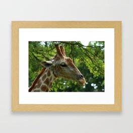 Giraffe Portrait Framed Art Print
