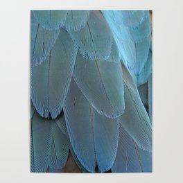Blue feather Poster