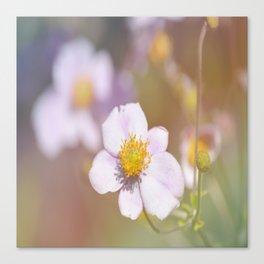 Anemone in the Garden Canvas Print