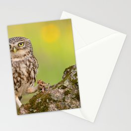 A little owl Stationery Cards