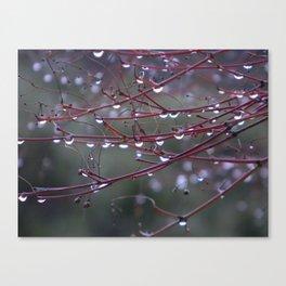 Raindrops in Japan Canvas Print