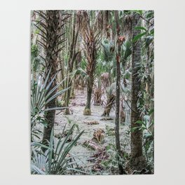 Palm Trees in the Green Swamp Poster
