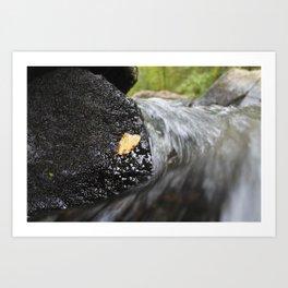 Leaf and Waterfall Art Print