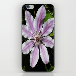 Clematis Nellie Moser iPhone Skin