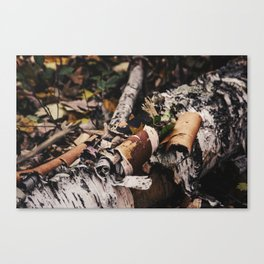 Birch Rolls Canvas Print