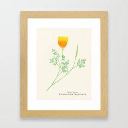 Botanical Sketches 6: California Poppy Framed Art Print