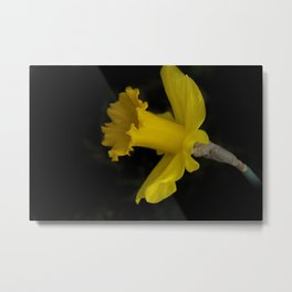 blossoms on black background -03- Metal Print