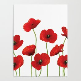 Poppies Field white background Poster