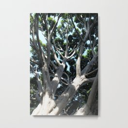 Old Fig Tree Metal Print