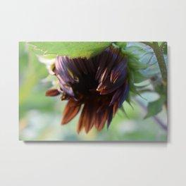 Black Sunflower Metal Print