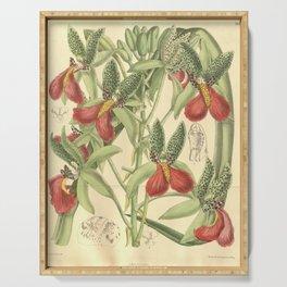 Flower 7932 cymbidium rhodochilum Serving Tray