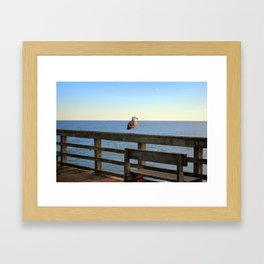 Perched On The Pier Framed Art Print